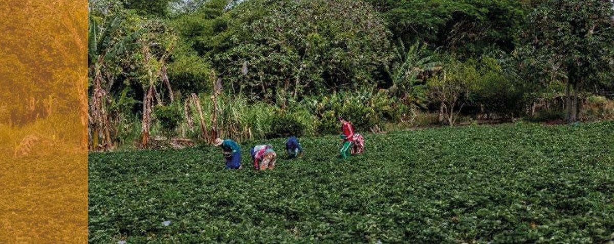 Mapeamento de ações de agroecologia quer chegar à agenda de novos prefeitos